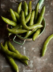 broad beans, fava beans