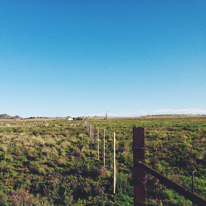 a sheep farm - Processed with VSCOcam with f2 preset
