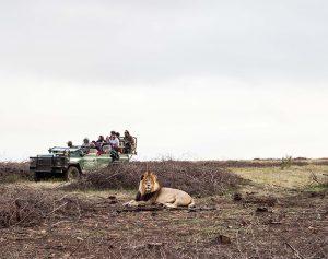 male lion atGondwana Game Reserve