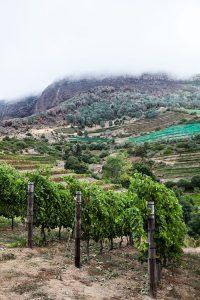 vineyards at Eagles Nest