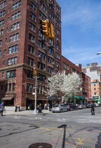 Blossoms in Manhattan, New York City