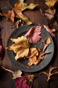 autumn leaves gathered in Franschhoek