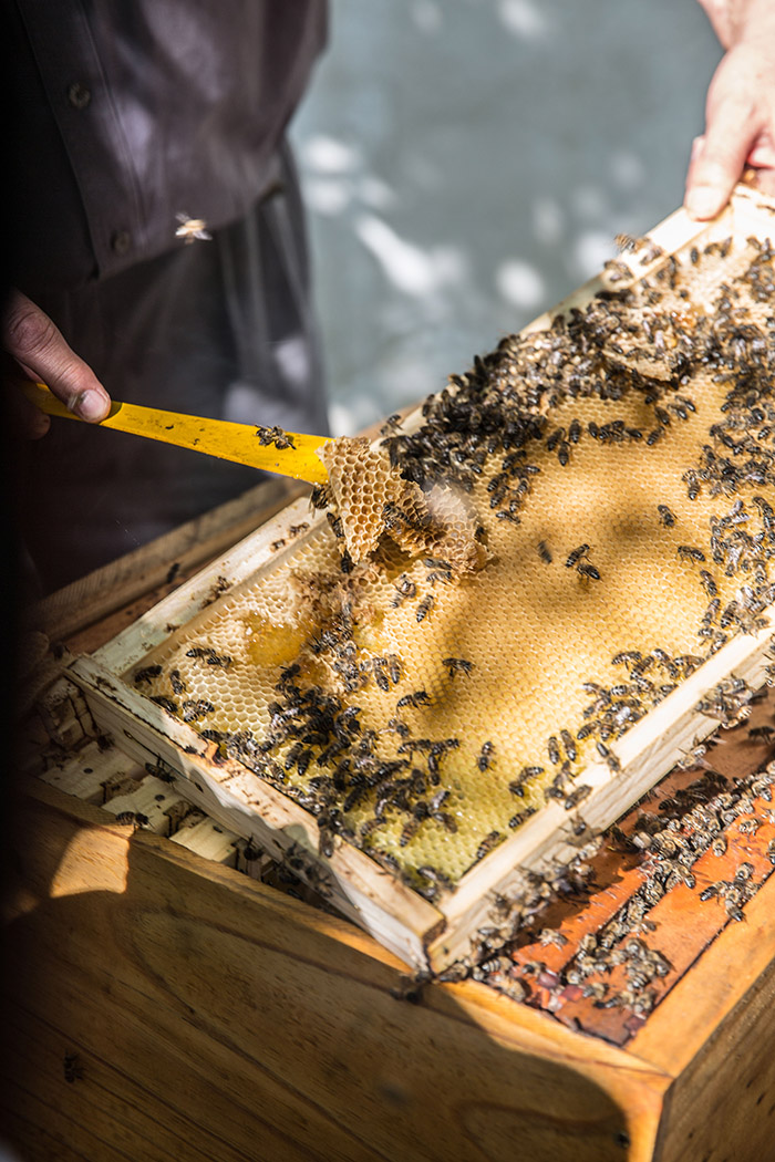 Bee keeping on Babylonstoren