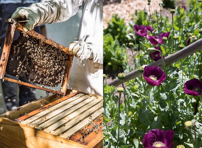 Bee keeping on Babylonstoren