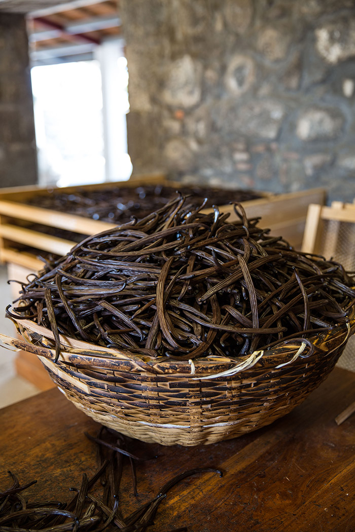 vanilla beans being hand sorted and graded