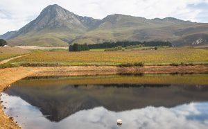 Creation Wine Estate, Hemel-en-Aarde, Western Cape