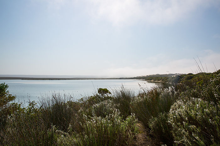 De Hoop Nature Reserve, Western Cape, South Africa