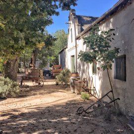 Wineflies Wine Tour to Stellenbosch