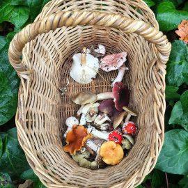 A mushroom forage at Delheim, Stellenbosch, South Africa