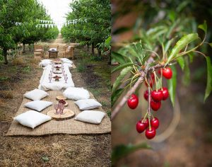 Sweet Cherry Time picnic in the orchard